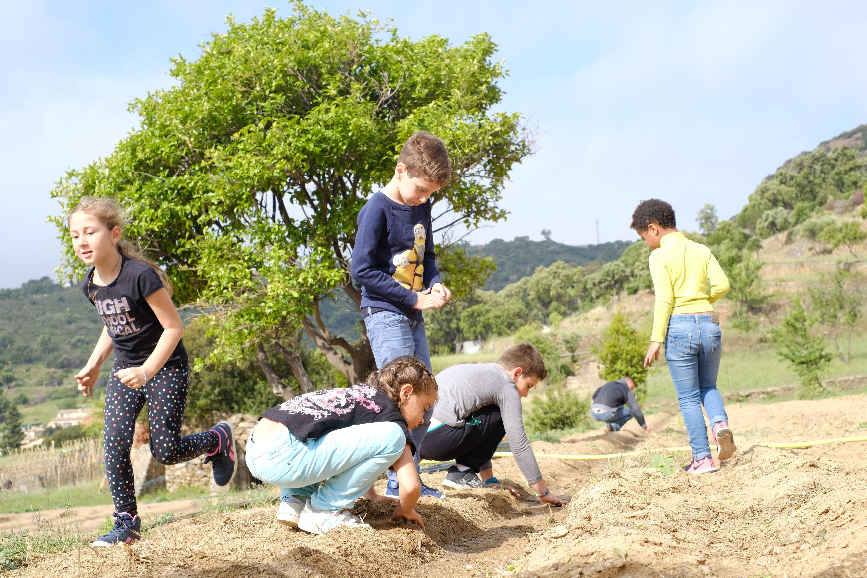 Plantation de tournesols par les élèves de l'école Marc Legouhy